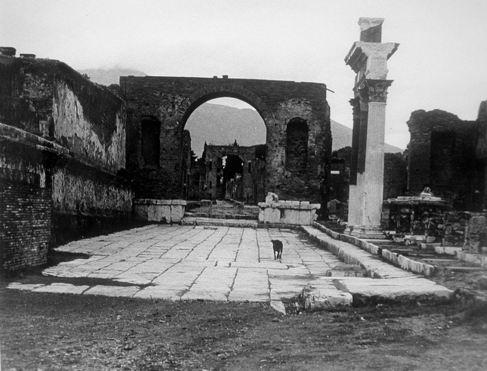 Dog in Pompeii Italy