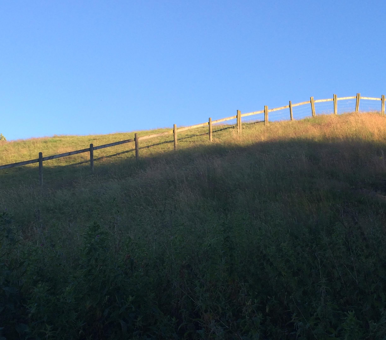 Across the Field